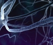 53020701_c0082921-neurons-spl
