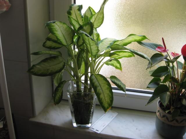 Ljekovita svojstva sobnih biljaka Banjaluka.com