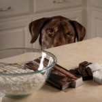 pas i cokolada