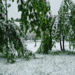 snijeg-u-maju5Igor-Simović