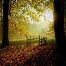 suncan-dan-jesen