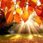 jesen-sunce