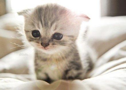 sweet-pussycat