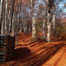 kasna-jesen
