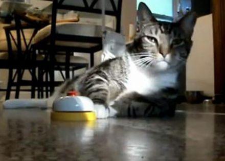 Divlja maca vids