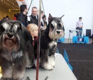 izložba pasa