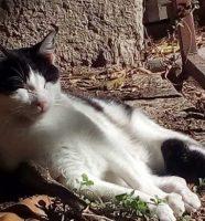 otrovane mačke