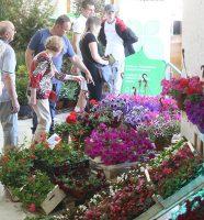 festival cvijeća