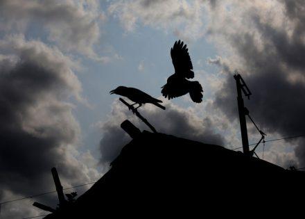 vrane