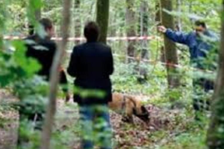 Tragedija u Doboju: Drvosječa nastradao prilikom sječe šume