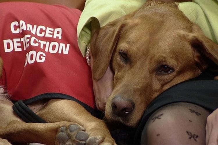 Psi mogu nepogrešivo da nanjuše neke bolesti