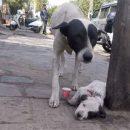 štene