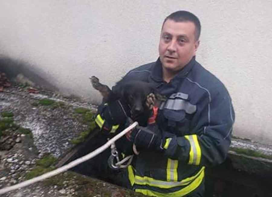 Banjalučki vatrogasci spasli psa iz kanala (Foto)